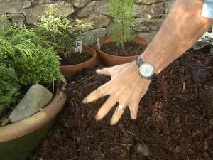 gby1711_1a_bury-evergreen-pots1_lg
